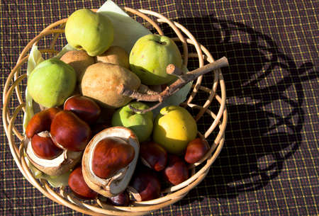 inedible: Long Autumn shadows thrown by basket with inedible autumn fruits - Japonica apples & conkers