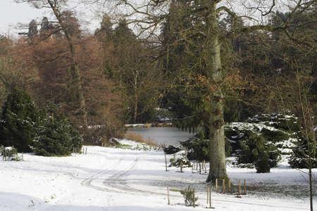 rushes: Tracks through snow to a frozen lake amidst pine trees