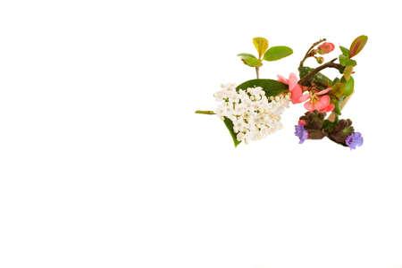 floral design for corner of paper Stock Photo - 2631442