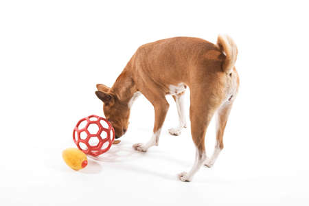 inscrutable: Pet dog has retrieved treat from within shaped ball