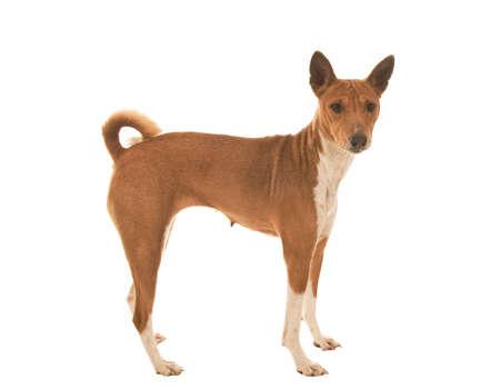 inscrutable: Dark eyed Pet dog looking very surprised