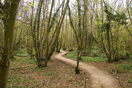 Sussex woodland walk with wood anemones in springtime Stock Photo - 2839091