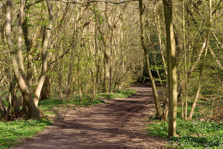 Track through Sussex Woodland in Springtime Stock Photo - 2839088