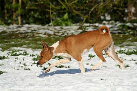 dog nose: cane, naso alla terra, neve di fusione desplorazione a velocit�