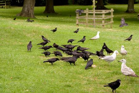 Feeding birds in a park