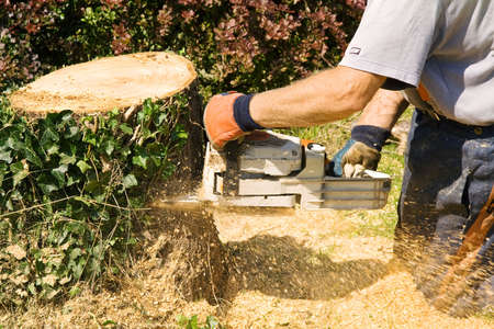 fragments: Man wearing gloves wielding a chainsaw to cut through the rmains of a tree stump. Fragments of wood are flying everywhere