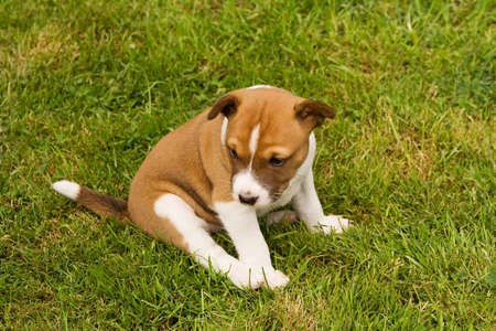 Small puppy sitting on grass and frowning