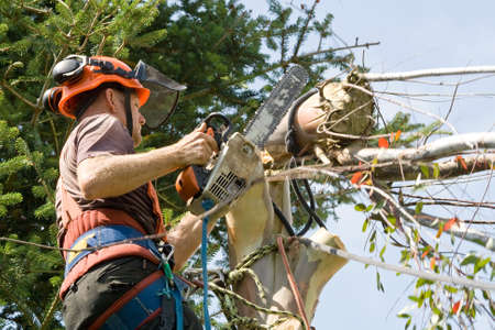 implementing: Man wearing harness, hard-hat and goggles using a chainsaw to cut the last of a tree