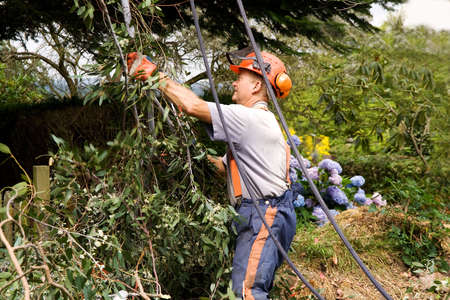 Man working with ropes to bring sawn branches safely to the ground