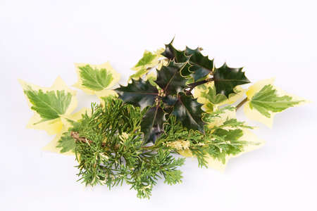 variegated: Variegated autumn greenery with contrasting textures
