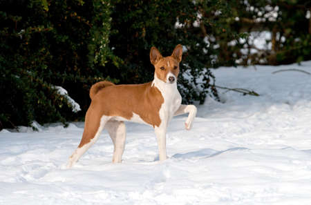 Proud puppy having fun in snow