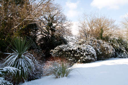 sheltered: Winter snow and sunlight on a sheltered row of shrubs