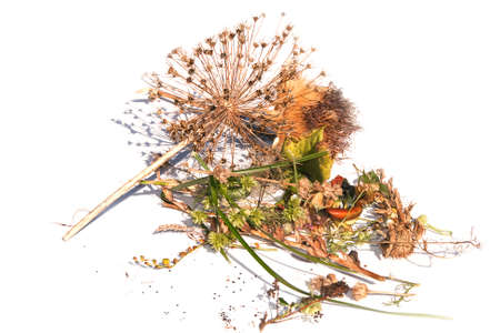 Random collection of harvested autumn seed heads photo