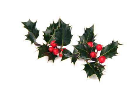 sprig of dark green holly with bright red berries Stock Photo