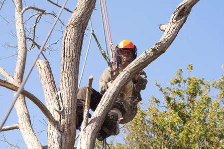 toter baum: Mann mit Sicherheit Kabelbaum und Seile, wie er �ber eine tote Baum saws
