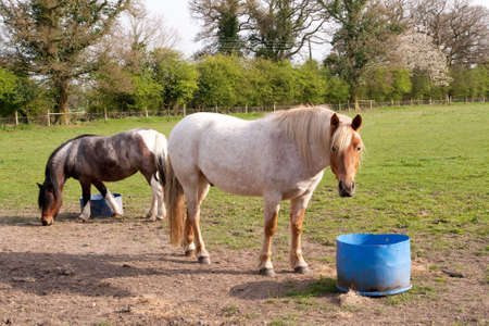 ceased: Horse ceased eating to watch the camera