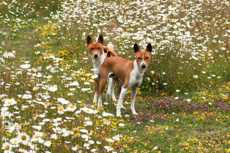 Two pets ambling through a wildflower meadow