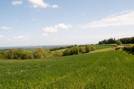 weald: View of wheat fields across the Sussex Weald