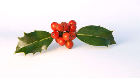Spray of holly like a plane about to take off