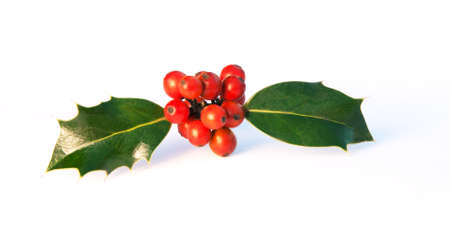 holly berry: insect suggested by holly sprig