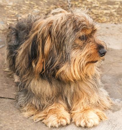 esquimales: Retrato de un perro hermoso