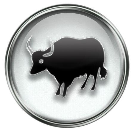 buey: Zodiac buey icono gris, aislados sobre fondo blanco.