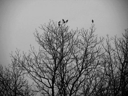 Little Birds Stock Photo