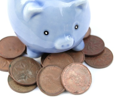 guarding:                             Little blue piggy bank protecting pennies. Isolated on white.