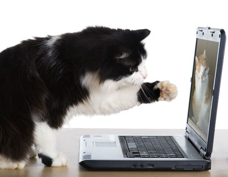 laptop keyboard: Cat pulls a paw to the laptop screen