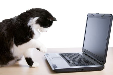 uses computer: Cat uses a laptop computer