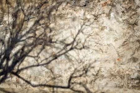 plasterwork: Shadow from a tree on an old wall