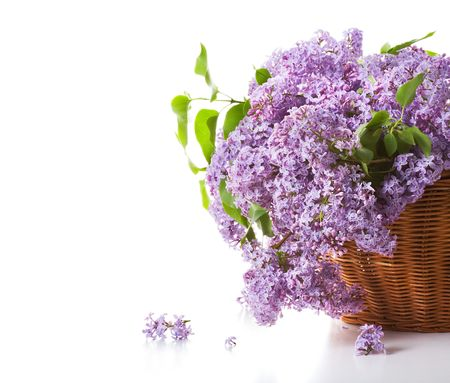 Blossoming lilac in a basket