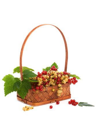 Basket with berries of a currant photo