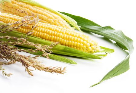 planta de maiz: Ma�z aislados en el blanco