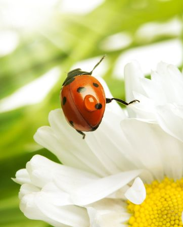 Ladybird Stock Photo - 4751141