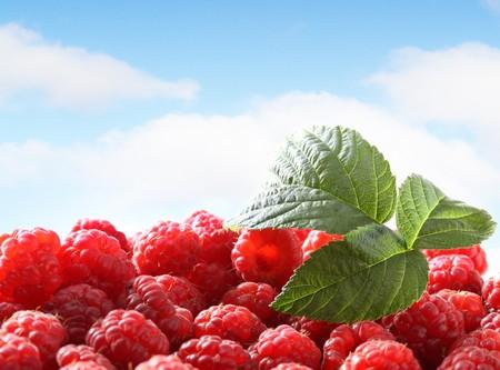 Fresh raspberry against sky photo