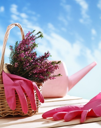 Basket with houseplant and garden tools Stock Photo - 13288104