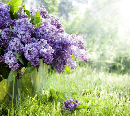 lilac: Brunch of lilacs in bucket