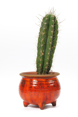 Cactus in a red flowerpot  Isolated on white photo