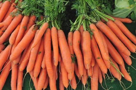 healthily: Fresh garden carrots Stock Photo