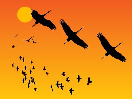 vinçler: Günbatımı üzerinde kuş Grubu Çizim