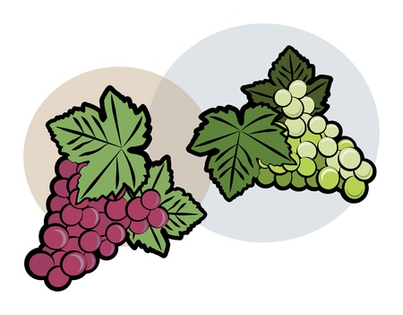 Bunch of green and red grapes Stock Vector - 16656904