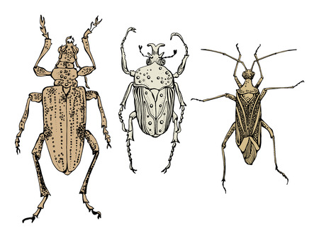 Hand draw of insects Vector