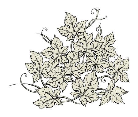 foglie disegnati a mano, vettore