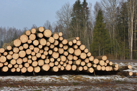Pile of logs on meadow in forest, North Lithuania