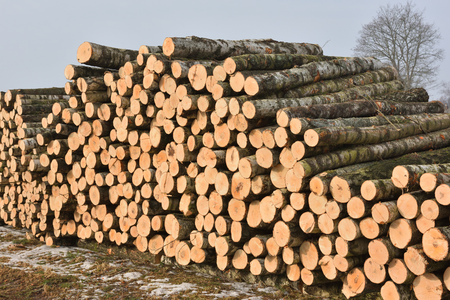 felled: Pile of logs on meadow in forest, North Lithuania