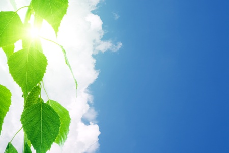 birchen: Green leaves, white clouds, blue sky Stock Photo