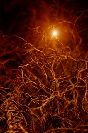 darkness: Mysterious picture of night forest. Gnarled branches with bright orange light. Stock Photo