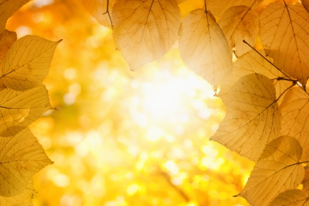 Fall background - orange leaves, bright sunlight photo