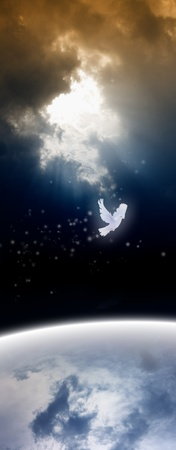 White dove from heaven, bright light from above photo